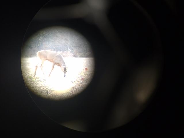 deer through bino